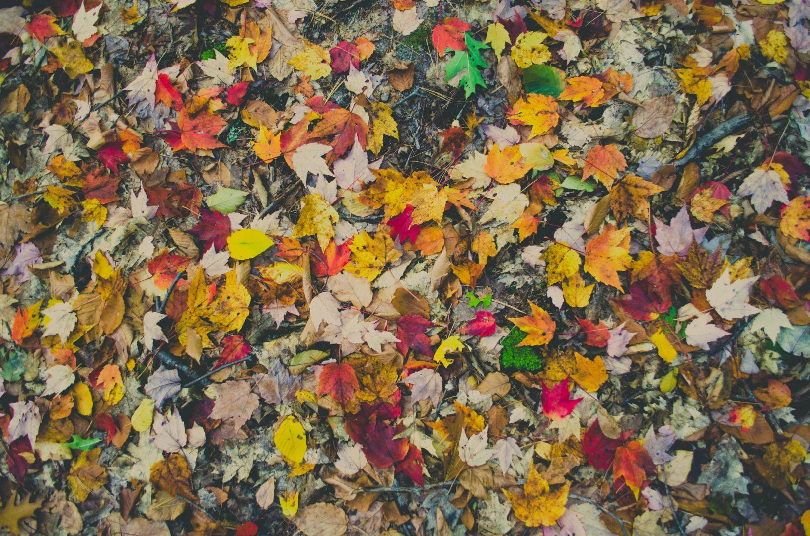 Flash back sur nos événements de l'automne !